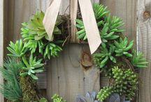 Green plants & Succulents