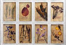 Картины гербарии в стиле Прованс