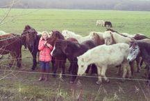 Horses,Riding..