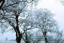 Season ♥ Winter