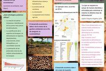 La deforestación en Colombia