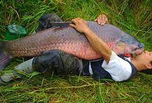 Ψαρεμα / Ψαρεμα