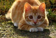 Gatos lindos