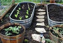 Veggie Patch-Patio gardening
