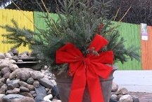 Winter decorations / When nature isn't providing us with much color, a winter container becomes an even more important part of your homes outdoor look. We like to create containers that last thru the winter and are more than just spruce tops in a pot! / by Viola Nursery and Greenhouse