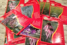 Seed School - How to grow wildflowers from seed / North American wildflowers are so very beautiful!  Learn super simple techniques to grow your own wildflowers from seed.  Learn more:  http://www.wildflowerfarm.com