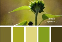 House colors / by T Siegner