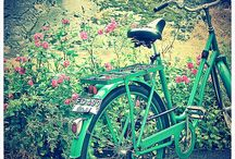 bicycles / by Kristy Schalk