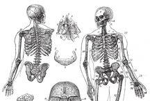 bone health naturally