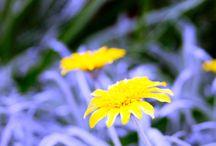 Photography /  snap snap