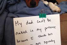 Dog and cat shaming