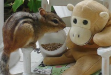 Monkey and Friends / His goodness of heart and simplicity of character were irresistible. (Persuasion, Ch 13)
