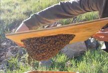 bees abeilles