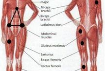 health/bodywork