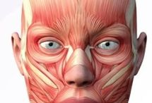 Botox / Toxina botulínica