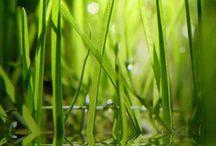 Зеленая полоса