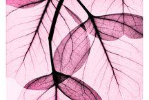   Botanical Art   / botanic, botanical art, botanical home decor, plants, design, fashion