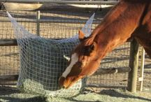 Horse Health / Help prevent colic problems by slowing down your horse hay consumption.  Also helpful for the obese horse.