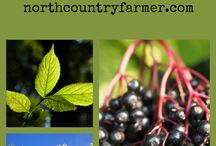 Best of North Country Farmer