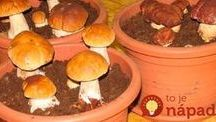 pestovanie hub