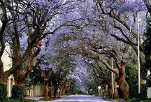 South Africa / by Erin Czarra