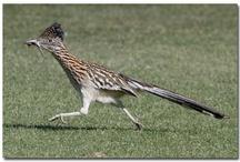 My favorite birds in Chappell Hill! / by Jodie Stewart