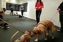 Training / Trained Dogs Live Better. This is a statement we truly believe in. Our Animal Behaviour College accredited Head Trainer has carefully designed all of our Workshops to help you bring out the best in your best friend. From Puppy Socials and Agility Play Days to Recall and Unruly Behaviour, our Workshops and Private Training Sessions are here to help.