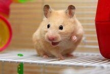Pet / Pet hayvanları hakkında genel bilgiler. http://vetrehberi.com/kategori/pet/