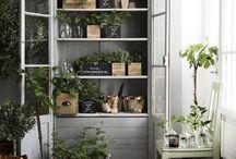 Rośliny ♡ Plants