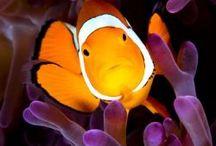 Amici di Nemo