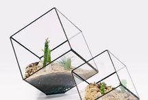 terrariums / by le zig le zag