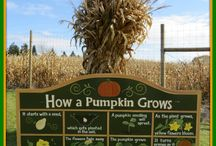 Farm Signs & Displays