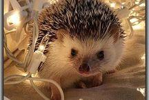 Prickle of Hedgehogs