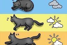 macskákról