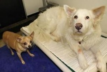 Dogs that need a home / Dogs that need rescue, foster or adoption. / by Melinda Bartoszewicz
