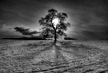 treetreetree / by Cass Henderson