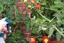 rady do záhradky