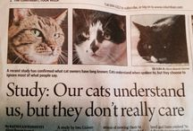"""cats - ubiquitous creatures - posters, ads, etc. /  """"If you have to ask, you'll never know. If you know, you need only ask."""""""
