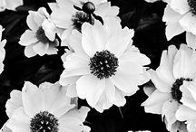 Monochrome pics