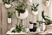 Plants and garden / by Casa Haus