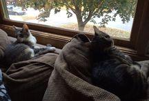 Our Fur Babies :)