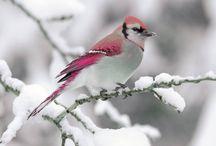 """beautiful, birds"""