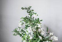 Blomknopp / Växter blommor mm