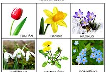 Jarní květiny foto