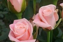 Çiçekler bitkiler