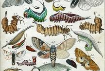 Scientific illustration - nature