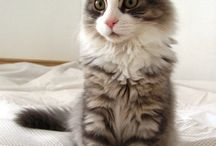 { Cats }