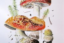 Akvarel svampe