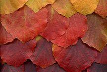 Season:  Autumn Color Combos