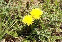 my photo_plant / 花とか実とか葉っぱとか。
